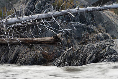Driftwood On The Rocks Poster