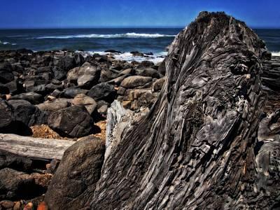 Driftwood Rocks Water Poster by Thom Zehrfeld