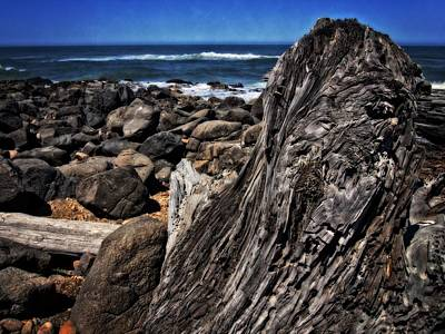 Driftwood Rocks Water Poster