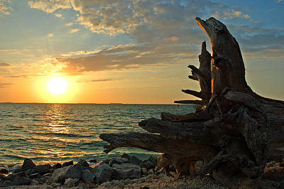 Driftwood Sunset Poster by Susanne Van Hulst
