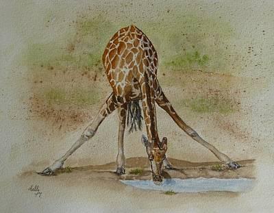 Drinking Giraffe Poster