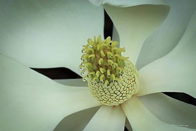 Dripping Wet Beautiful Magnolia Flower Art Poster