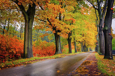 Poster featuring the photograph Driving On The Autumn Roads by Dmytro Korol
