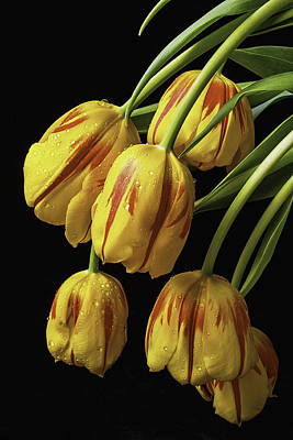 Drooping Tulips Poster by Garry Gay