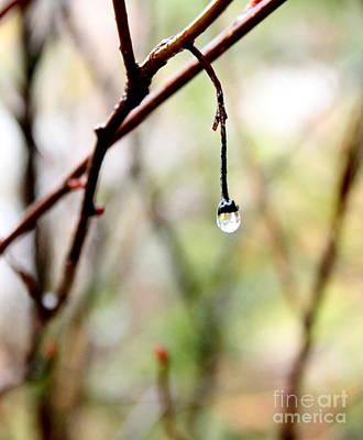 Drop Of Rain Poster by Farzali Babekhan