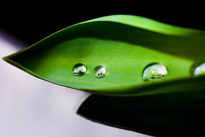 Droplet On Green Leaf  Poster