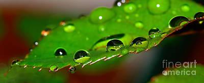 Droplets On Rose Leaf By Kaye Menner Poster
