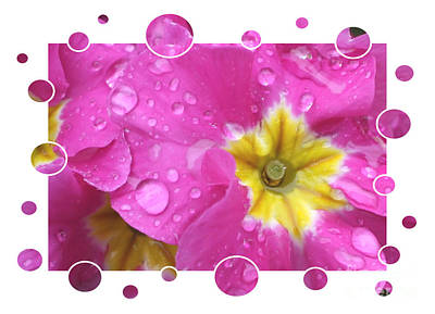 Bubbly Pink Raindrops  Poster by Carol Groenen