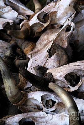 Dry As Bones Poster by Linda Shafer