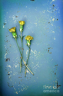 Dry Flowers On Blue Poster by Jill Battaglia
