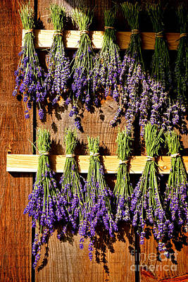 Drying Lavender Poster