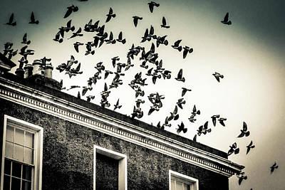 Flight Over Oscar Wilde's Hood, Dublin Poster