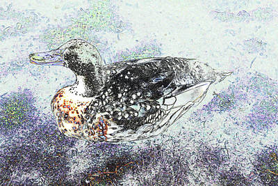 Poster featuring the photograph Duck With Fine Plumage by Nareeta Martin