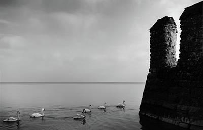 Ducks In Lake Garda, Italy Poster