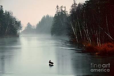Ducks On A Frozen Pond Poster
