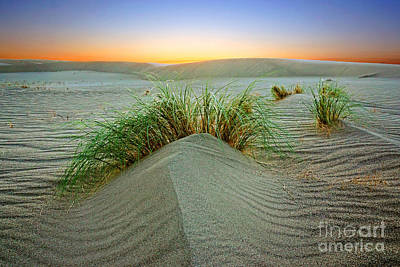 Dune Grass Of Bruneau Idaho Poster