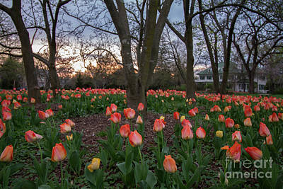 Poster featuring the photograph Dusk At Sherwood Gardens by Chris Scroggins