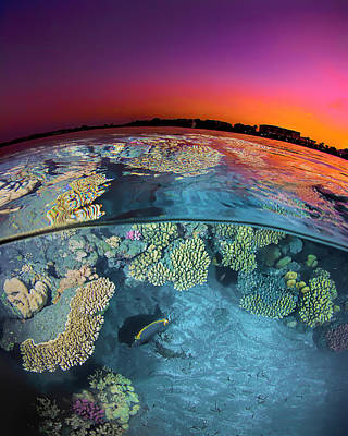 Dusk Over The Red Sea Reef Poster by Henry Jager