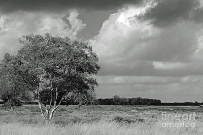 Dutch Landscape National Park Dwingelderveld, Black And White Poster