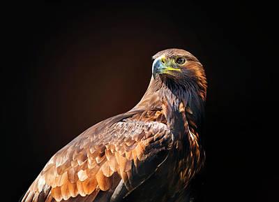 Eagle 2 Poster by Ivan Vukelic