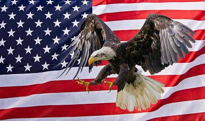 Eagle And Flag Poster