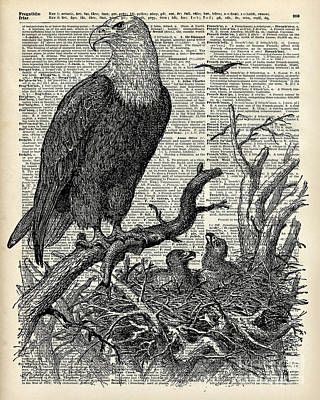 Eagle And Its Nest  Poster