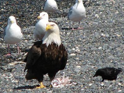 Eagle Feast Poster
