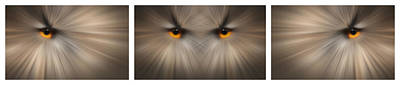 Eagle Owl Eye Triptych Poster