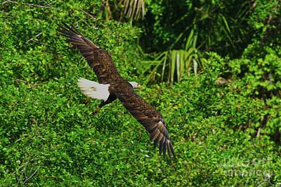 Poster featuring the photograph Eagle Series Flight by Deborah Benoit