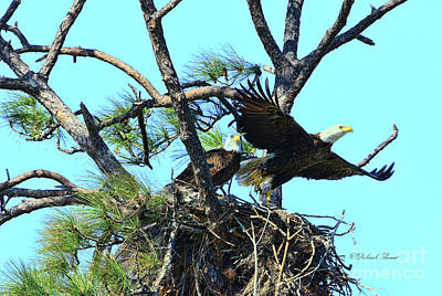Poster featuring the photograph Eagle Series The Nest by Deborah Benoit