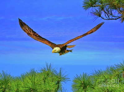 Poster featuring the photograph Eagle Series Through The Trees by Deborah Benoit