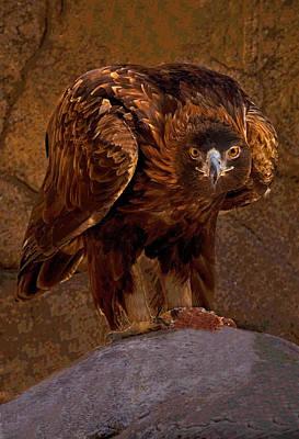 Eagle's Stare Poster