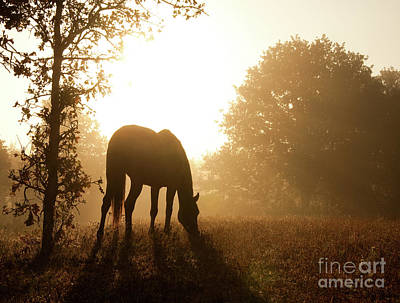 Early Fall Morning Poster