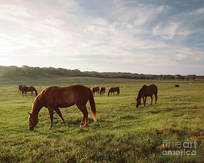 Early Morning Graze Poster by A New Focus Photography