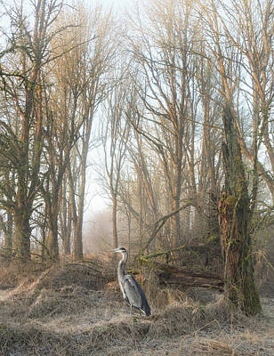 Poster featuring the photograph Early Morning In The Backwoods by Angie Vogel