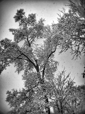 Poster featuring the photograph Early Snow by Steven Huszar