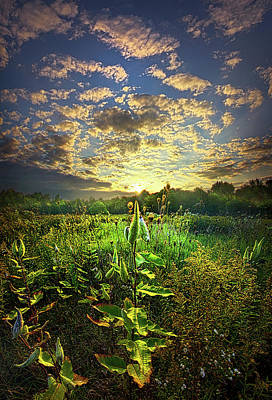 Earth Life Poster by Phil Koch
