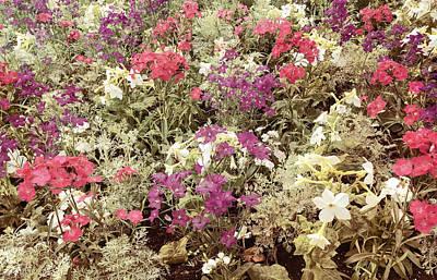 Earth Tone Mixed Flower Garden Poster