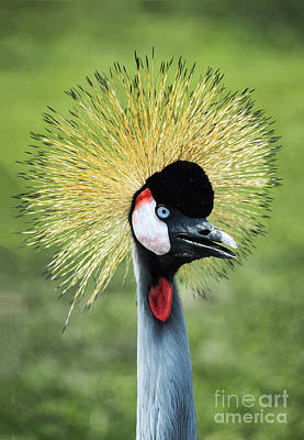 East African Crowned Crane Poster