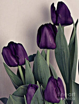 A Display Of Tulips Poster by Sherry Hallemeier