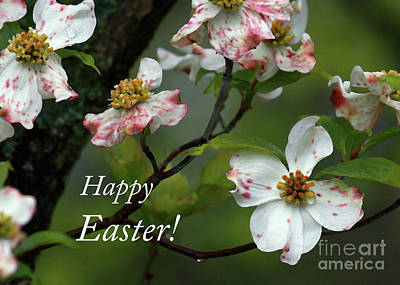 Poster featuring the photograph Easter Dogwood by Douglas Stucky
