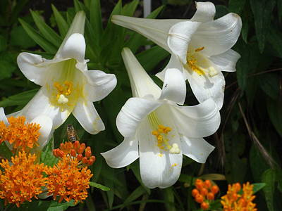 Easter Lilies And Butterfly Weed Poster