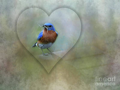 Eastern Bluebird Poster by Brenda Bostic