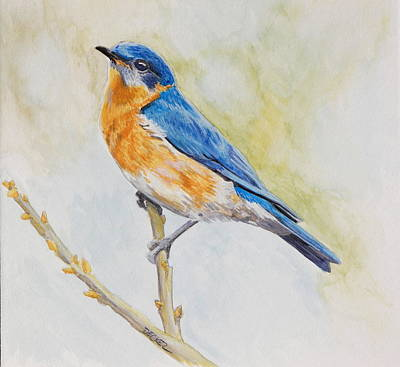 Poster featuring the painting Eastern Mountain Bluebird by Robert Decker