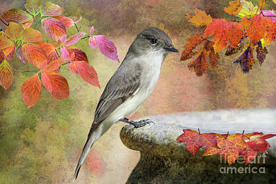 Eastern Phoebe In Autumn Poster by Bonnie Barry