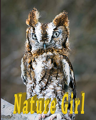 Eastern Screech Owl Nature Girl Poster