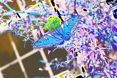 Eastern Tiger Swallowtail Butterfly - Blue Abstract Poster by Scott D Van Osdol