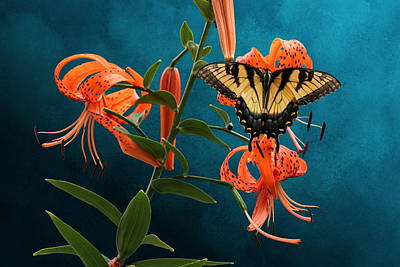 Eastern Tiger Swallowtail Butterfly On Orange Tiger Lily Poster