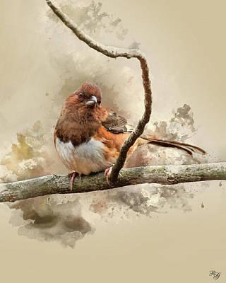 Bird Art - Eastern Towhee - Female Poster