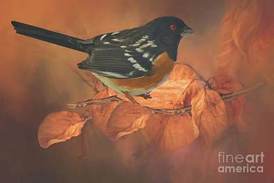 Spotted Towhee In Autumn Poster